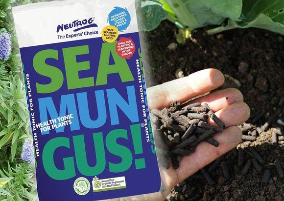Prepare for Summer & Nourish Your Garden with SEAMUNGUS