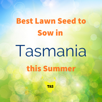 SUMMER LAWNS - Best Lawn Seed to sow in Tasmania this Summer