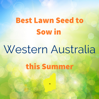 SUMMER LAWNS - Best Lawn Seed to sow in Western Australia this Summer