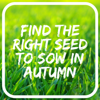 What seed to sow in your area in AUTUMN