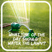 What time of the day should I water my lawn?