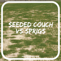 For Turf Managers:  Seeded Couch vs Sprigs