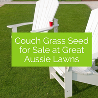 Couch Grass Seed for Sale at Great Aussie Lawns
