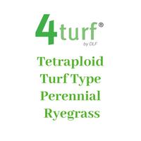 4Turf Tetraploid Turf Type Perennial Ryegrass - NEW PRODUCT