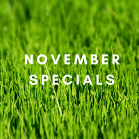 NEW SPECIALS FOR NOVEMBER 2019