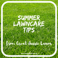 Summer Lawncare Tips from Great Aussie Lawns
