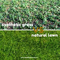Natural or Synthetic Lawn? Which is best?