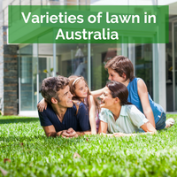 Varieties of Lawn in Australia: Kikuyu, Fine Ryegrass, Couch, Tall Fescue and more.