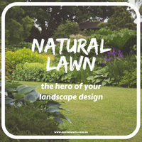 Natural Lawn: The hero of your landscape design
