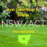 AUTUMN LAWNS: Best Lawn Seed to sow in NSW and ACT this Autumn