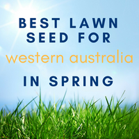 SPRING LAWNS: Best Lawn Seed to Sow in Western Australia in Spring