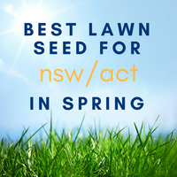 SPRING LAWNS: Best Lawn Seed to Sow in NSW/ACT in Spring