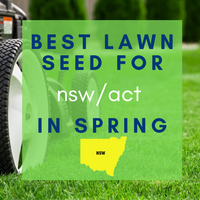 SPRING LAWNS 2019:  Best lawn seed to sow in NSW/ACT