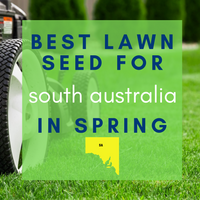 SPRING LAWNS 2019:  Best lawn seed to sow in South Australia