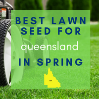SPRING LAWNS 2019:  Best lawn seed to sow in Queensland