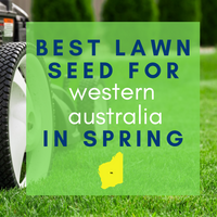 SPRING LAWNS 2019:  Best lawn seed to sow in Western Australia
