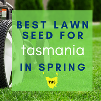 SPRING LAWNS 2019:  Best lawn seed to sow in Tasmania