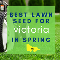 SPRING LAWNS 2019:  Best lawn seed to sow in Victoria