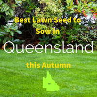 AUTUMN LAWNS: Best Lawn Seed to sow in Queensland this Autumn