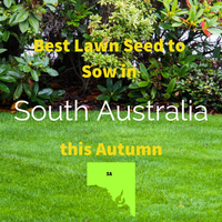 AUTUMN LAWNS: Best Lawn Seed to sow in South Australia this Autumn