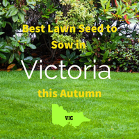 AUTUMN SOWING - Best Lawn Seed to Sow in Victoria 2020