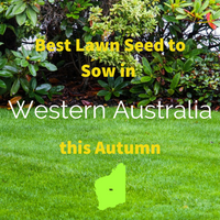 AUTUMN SOWING - Best Lawn Seed to Sow in Western Australia 2020