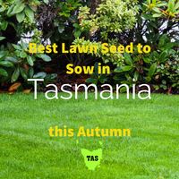 AUTUMN SOWING - Best Lawn Seed to Sow in Tasmania 2020