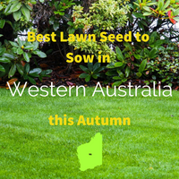 AUTUMN LAWNS: Best Lawn Seed to sow in Western Australia this Autumn