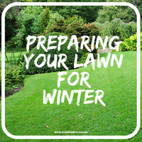 How to Prepare Your Lawn For Winter