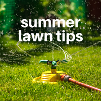 Summer Lawn Tips 2019
