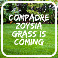 Zoysia Lawn Seed - coming soon to Great Aussie Lawns
