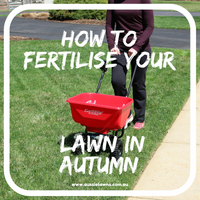 How to Fertilise Your Lawn in Autumn