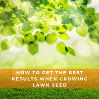 How to get the best results when growing lawn seed