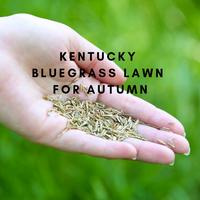 Ben from Lawn Tips Kentucky Bluegrass Project