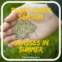 Plant Warm Season Grasses in Summer!