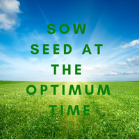 Sow Lawn Seed at the Optimum Sowing Time