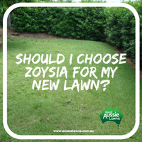 Should I choose Zoysia for my New Lawn?
