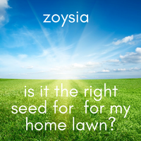 Zoysia Lawn Seed - Is it the right seed for my home lawn?