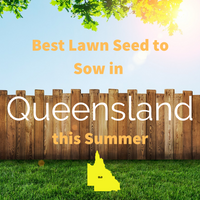 SUMMER 2019 - Best Lawn Seed to sow in QUEENSLAND this Summer