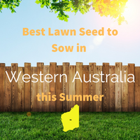 SUMMER 2019 - Best Lawn Seed to sow in WESTERN AUSTRALIA this Summer