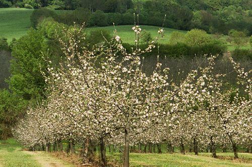 Calvados: A true savoir-faire