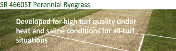 SR4600ST Perennial Ryegrass