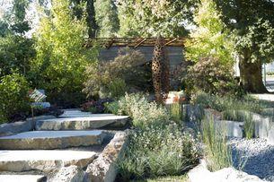 The Patriarch's garden