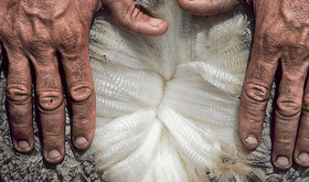 The Merino Wool Difference