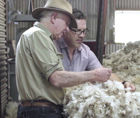 Why We Choose Superfine Merino Wool
